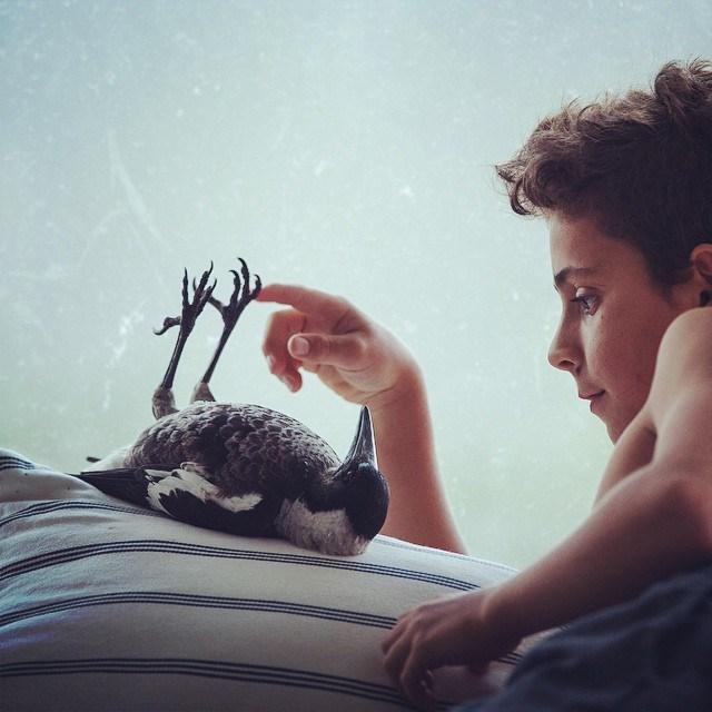 少年と鳥の魔法のような友情と日々-Penguin Bloom