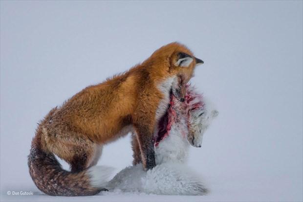 自然写真コンテストの最高峰『Wildlife Photographer of the Year 2015』が発表